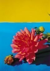 Margot de Korte -Geel-blauw en dahlia, 2002- Postkaart