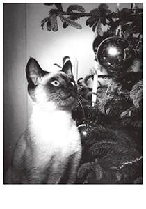 Frits Lemaire (1921-2005) -Studio Lemaire/Kat bij kerstbo- Postkaart