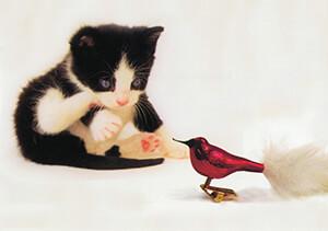 Francis Lake -Stekie ziet vogel- Postkaart