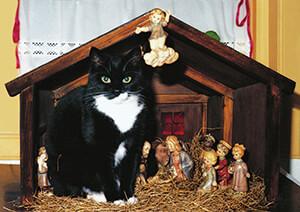 Ellen van de Woestijne -Sjonnie in de kerststal- Postkaart