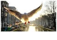 Gerard Schoone -Seagulls in the Red-Light-District, Amsterdam #2- Postkaart