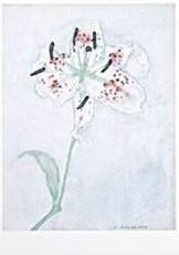 Mondriaan (1872-1944)Mondrian -Lelie- Dubbele Kaart