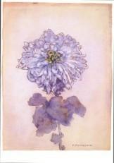 Mondriaan (1872-1944)Mondrian -Chrysant- Dubbele Kaart