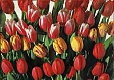Paul Huf (1924-2002) -Flowerpower no.1- Dubbele Kaart