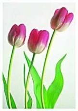 Paul Huf (1924-2002) -Flowerpower no.6- Dubbele Kaart