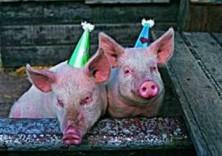 Piet van der Meer -Max and Maurits pig- Dubbele Kaart