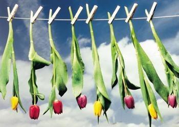 Martie Seesing -Knijpers met bloemen aan de waslijn, 2000- Dubbele Kaart