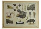 René Jacobs (1969)  -  In het gebied van de bovennijl, 2013 - Postkaart -  1A00029-1