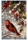 A.N.B.  -  Vogel in een sneeuwlandschap - Postkaart -  1C0299-1
