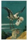 Anonymus  -  Ooievaar bezorgt een baby - Postkaart -  1C2049-1