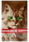 Anonymus  -  Kat met groene ogen - Postkaart -  1C2215-1