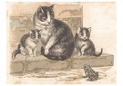 Anonymus  -  Drie katten en een kikker - Postkaart -  1C2238-1
