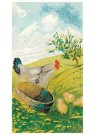Anonymus  -  Kip en kuikens - Postkaart -  1C2372-1