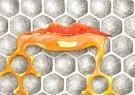 Willibrord Baar (1952)  -  A taste of honey - Postkaart -  2C0094-1