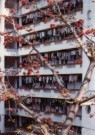 Gerald van der Kaap (1959)  -  Xiada (fruit tree), Xiamen, 2002 - Postkaart -  A10301-1
