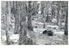 Jimi Dams (1963)  -  Im Walde - Postkaart -  A11504-1