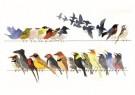 Siegfried Woldhek (1951) - Twitter, 2011 - Postkaart - A12225-1
