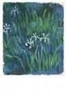 Claude Monet (1840-1926) - Iris - Postkaart - A13443-1