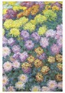 Claude Monet (1840-1926)  -  Massif De Chrysanthemes - Postkaart -  A13478-1