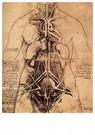 Leonardo da Vinci (1452-1519)  -  Drawing Of A Womans Torso - Postkaart -  A13514-1
