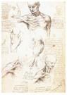 Leonardo da Vinci (1452-1519)  -  Anatomical Studies Of A Male Shoulder, 1509 - Postkaart -  A13554-1