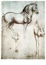 Leonardo da Vinci (1452-1519)  -  Studie van paarden, 1490 - Postkaart -  A13560-1