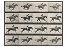 Eadward Muybridge(1830-1904)  -  Horse In Motion - Postkaart -  A14212-1