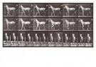 Eadward Muybridge(1830-1904)  -  Katydid, lopend, uitgerust tot sulky - Postkaart -  A14217-1