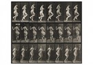 Eadward Muybridge(1830-1904)  -  Pair Of Works: Pair Of Plates From Animal Locomotion, Both F - Postkaart -  A14224-1