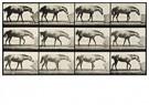 Eadward Muybridge(1830-1904)  -  Paard duwt een blok - Postkaart -  A14229-1