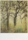 Paul Citroen (1896-1983)  -  Bosgezicht - Postkaart -  A1672-1