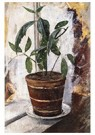 Edvard Munch(1863-1944)  -  Potted Plant On The Window-Sill - Postkaart -  A17250-1