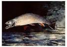 Winslow Homer (1836-1910)  -  A Brook Trout, 1892 - Postkaart -  A26856-1
