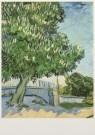 Vincent van Gogh (1853-1890)  -  Bloeiende kastanjeboom, 1890 - Postkaart -  A3939-1