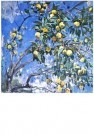G.A. Savinov (1915-2000)  -  A.Savinov/Late Apples - Postkaart -  A5822-1