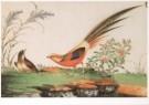 Anoniem  -  Vogels,Chinese schildering/SGM - Postkaart -  A6097-1
