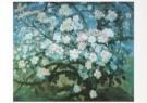 G.W. van Blaaderen (1873-1935) -  Bloeiende appelboom - Postkaart -  A6417-1