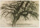 Mondriaan (1872-1944)Mondrian  -  Boom I, 1908-09? - Postkaart -  A6797-1
