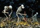 Anoniem  -  Skeletten, mens, Homo sap - Postkaart -  A7538-1
