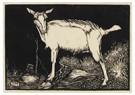 Jan Mankes (1889-1920)  -  Witte geit, staand naar links, 1915 - Postkaart -  A79501-1