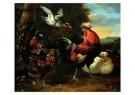 M. d'Hondecoeter (1636-1695)  -  Gevogelte - Postkaart -  A9049-1