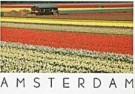 Ricardo Murad  -  Tulip Fields - Postkaart -  AU0643-1