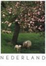 Igno Cuypers  -  Springtime - Postkaart -  AU0685-1