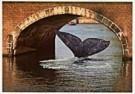 Tim Killiam (1947-2014)  -  Vistory, Surprising Holland - Postkaart -  AU1002-1