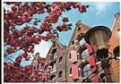 Igno Cuypers  -  Lente op de Brouwersgracht, Amsterdam - Postkaart -  AU1009-1