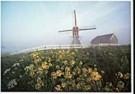 Aad Schenk  -  Windmills in the Haze, Holland - Postkaart -  AU1022-1