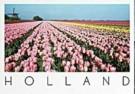 Henk van der Leeden (1941)  -  Rose, Yellow & Red tulip fields in Holland - Postkaart -  AU1026-1