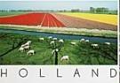 Henk van der Leeden (1941)  -  Schapen & Tulpen - Postkaart -  AU1041-1