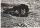Hilde Vaatstra (1947)  -  Doos van Pandora - Postkaart -  B0319-1
