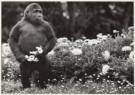 Leigh Henningham  -  Melbourne's Mzuri - Postkaart -  B0796-1
